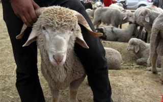 halkidiki-brothers-accused-of-stealing-dozens-of-sheep-and-goats