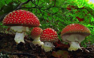 mushrooms-a-modern-day-greek-miracle