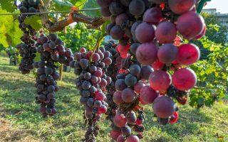 nemean-wines-athens-november-15