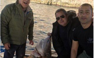 wwf-slams-kammenos-for-photo-with-dead-shark