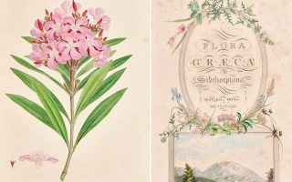 the-botanist-who-recorded-greek-flora