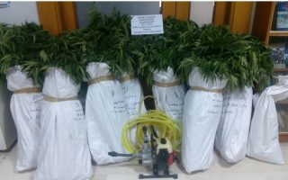 police-discover-marijuana-farm-in-ioannina