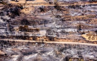 compensation-pledged-to-chios-gum-tree-farmers-following-fire