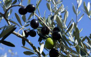 ring-busted-for-peddling-bogus-olive-oil