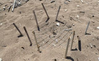 spike-in-vandalism-at-sea-turtle-nesting-site-in-kyparissia