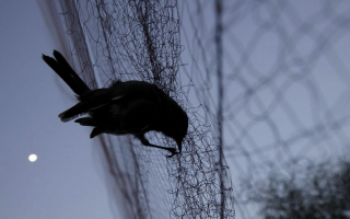 no-let-up-on-bird-poaching-crackdown-uk-bases-official-on-cyprus-says