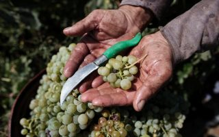 vineyard-visit-athens-february-5