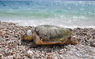 group-warns-of-cruelty-after-sea-turtles-found-beheaded