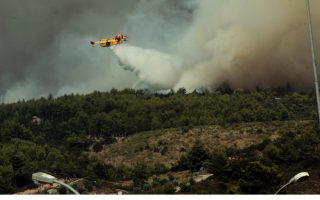 wildfires-raze-some-50-000-hectares-a-year-survey-finds