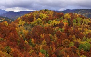 the-mapping-of-greece-amp-8217-s-forests-is-nearly-complete