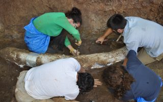 peloponnese-village-to-host-new-paleontology-museum