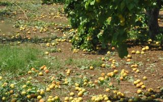 wild-weather-patterns-hitting-summer-crops-hard-across-greece