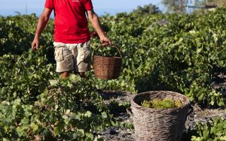 campaign-launched-to-boost-greek-wine-tourism