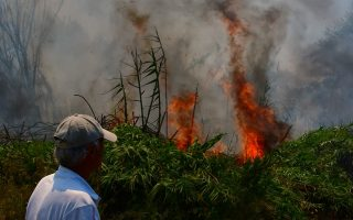 four-blazes-keep-firefighters-busy-in-peloponnese