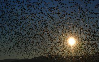 the-birds-of-heaven