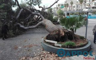 strong-winds-uproot-large-pine-tree-in-kalamata-square-but-noone-injured