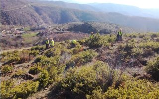 pipeline-plants-400-000-trees-and-shrubs-in-northern-greece0