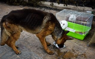 group-helping-place-fire-stricken-pets-with-foster-families