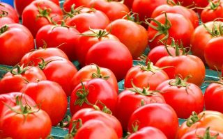 unfit-tomatoes-seized-destroyed-in-piraeus