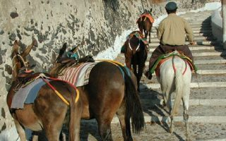 santorini-donkeys-gets-some-respite-with-ban-on-obese-tourists