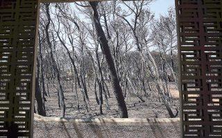 probe-points-to-fire-service-errors-in-east-attica-blaze