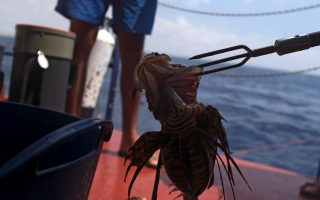 lionfish-invasion-in-cyprus-if-you-can-t-beat-em-eat-em0