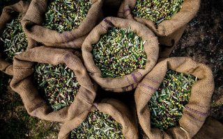 insistence-on-bulk-olive-oil-exports-costly-for-greece