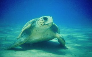 sea-turtles-injured-as-boats-flout-the-rules-on-zakynthos