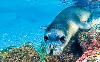endangered-mediterranean-monk-seal-gets-new-allies-at-the-alonissos-marine-park