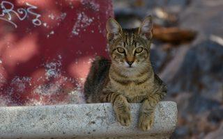 animal-welfare-bill-debate-continues-despite-objections