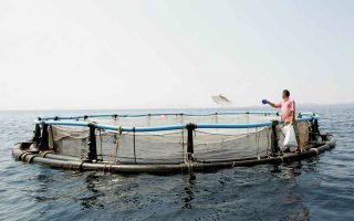 drop-in-fish-farming-output-will-see-prices-rebound