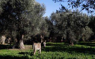 greek-olives-escape-us-tariff-hike