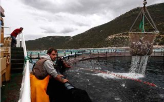 selonda-gets-fish-from-greece-certification