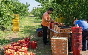 not-a-peachy-outlook-greek-producers-despair-over-trump-amp-8217-s-new-tariffs