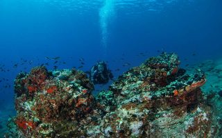 wwf-says-med-states-falling-short-in-marine-environment-protection