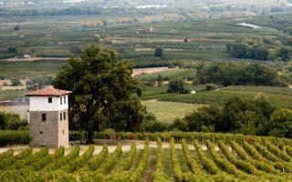 wine-roads-northern-greece-november-10-amp-038-24