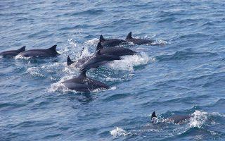 three-dolphins-seal-found-killed-in-northeastern-aegean0