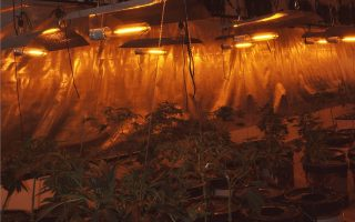 police-dismantle-hydroponic-cannabis-farm-in-central-greece