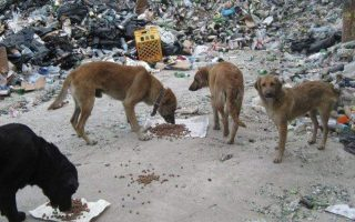 strays-charity-bazaar-athens-june-26-28