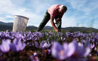 greek-saffron-producers-eye-market-share-in-china