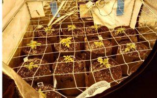 one-arrest-in-agia-varvara-cannabis-lab-raid