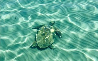 slow-tourism-season-a-boon-for-endangered-turtles-on-zakynthos0