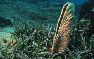 scientists-sound-alarm-over-endangered-species-of-clam