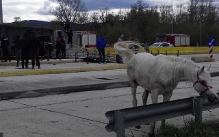 truck-carrying-horses-overturns-in-northwestern-greece