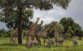 scientists-warn-a-million-species-at-risk-of-extinction