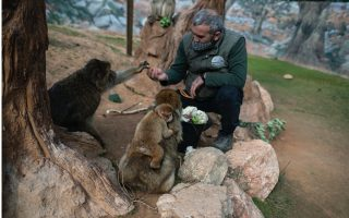 no-income-2-000-mouths-to-feed-lockdown-squeezes-greek-zoo0