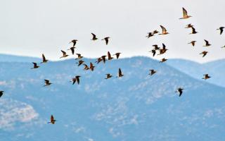 birds-fly-over-nafplio-as-urbanites-take-off-on-holiday