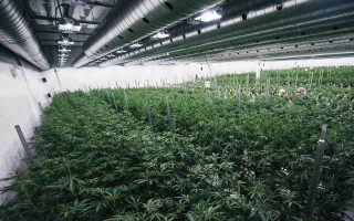 exports-of-medical-cannabis-forseen-in-new-bill