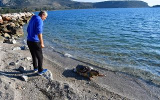 another-endangered-turtle-fatally-injured