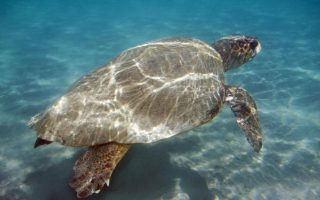 sea-turtle-deaths-broke-record-last-year-ngo-says
